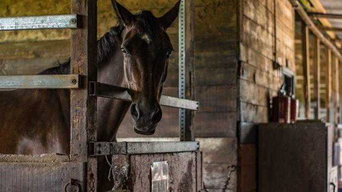 FTO: Horse Whisperer